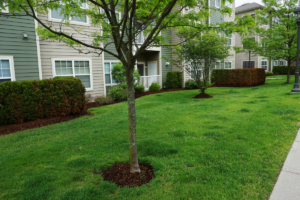 Commercial and Home Owners Association Landscaping Contractor Chattanooga TN