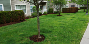 Home Owners Association Landscaping