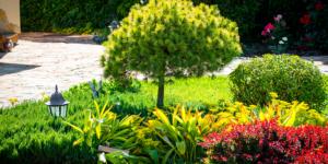 Total Lawn Care Service