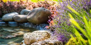 Water Garden Design & Installation